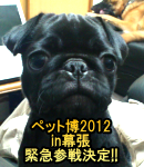2011年12月3日 Now on sale!